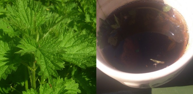 nettles and tea