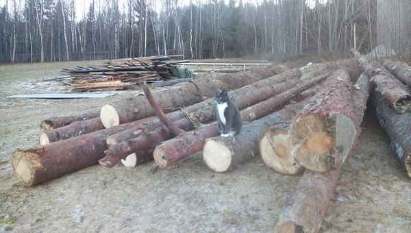 "Our cat who also made the journey to our new home in Norway. He's settling in now and likes to ensure he knows what's going on. Here, he is ""owning"" the logs that are going to be milled this spring."